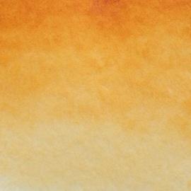 White night - indická žlutá 244