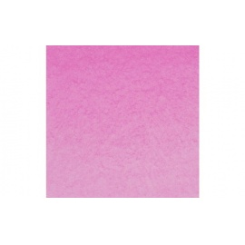 White night - pink peony 366