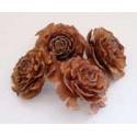 Cedrová růže 10 ks